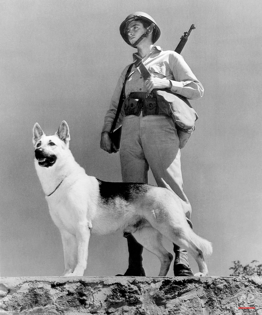 """A trained German shepherd dog and his soldier-master guard, a vital American defense position in the Hawaiian Island in an undated photo. The army sentry is equipped with rifle, metal helmet, experience and human brain. His four-footed assistant has acute sense of hearing and smell and thorough training in school operated by dogs for defense. Five thousands of these canine soldiers have been trained to guard important Hawaiian fortifications and shore lines and more are currently in """"schools."""" (AP Photo)"""