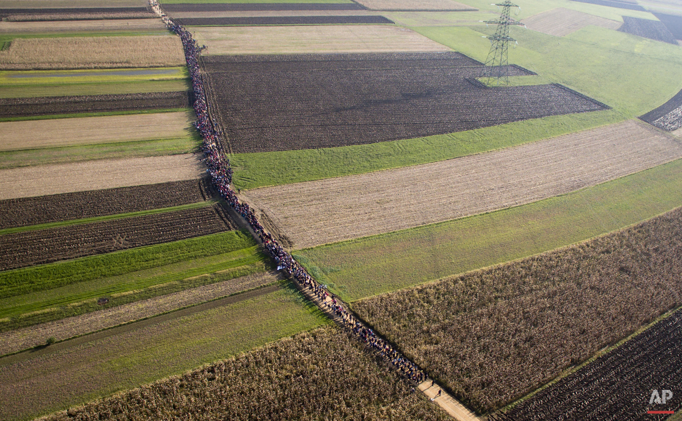 In this aerial view photo, a column of migrants moves through fields after crossing from Croatia, in Rigonce, Slovenia, Sunday, Oct. 25, 2015.  (AP Photo/Darko Bandic)