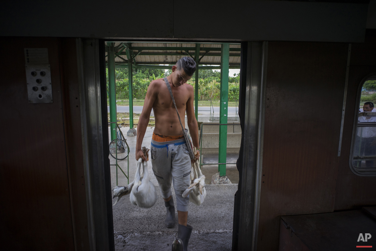 In this Aug. 26, 2015 photo, a young man boards the electric Hershey train with two live goats at the Hershey train station in Cuba. He's traveling to Casablanca, a municipality in Havana where he'll sell his livestock. (AP Photo/Ramon Espinosa)