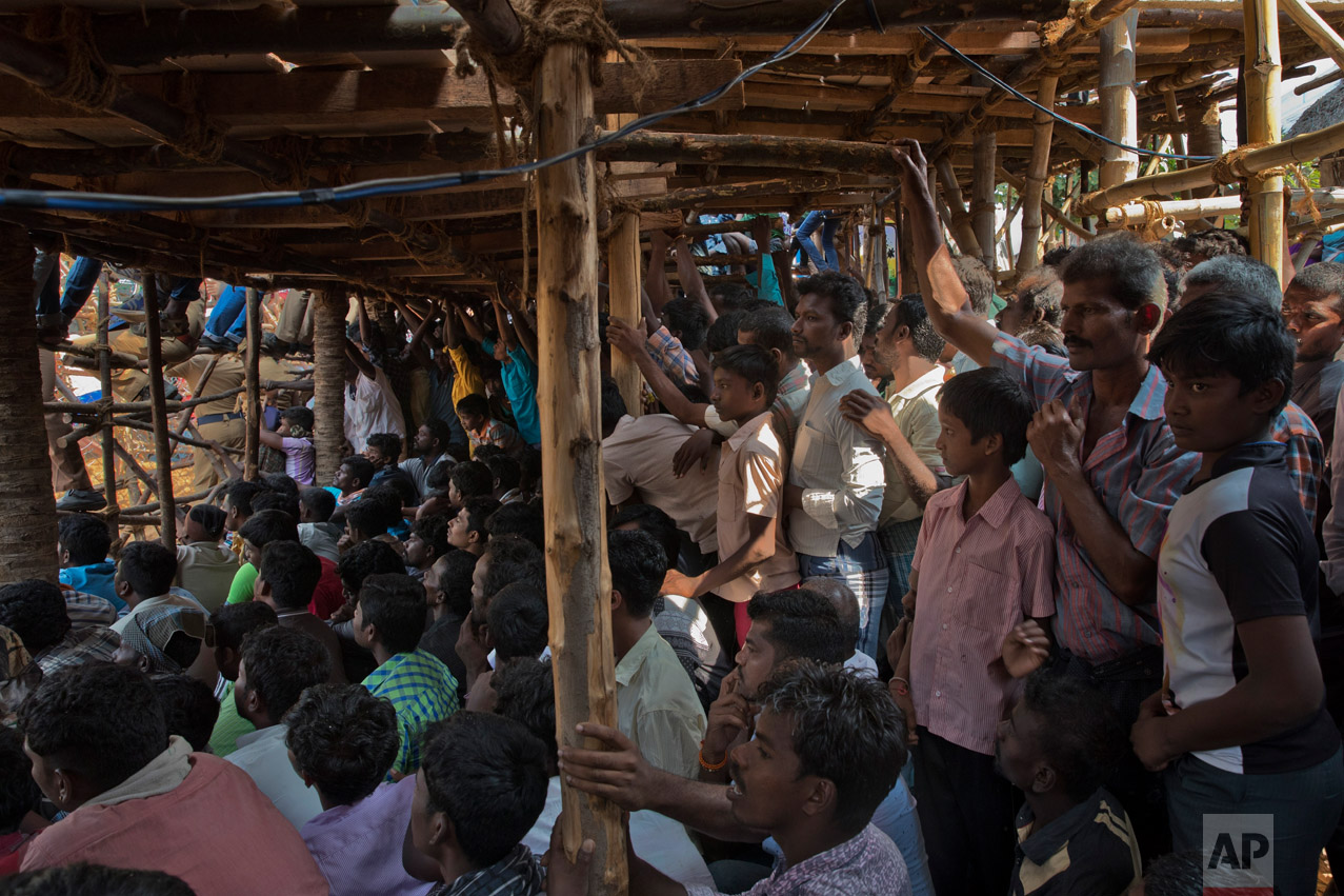 In this Feb. 9, 2017 photo, Indians attend a traditional bull-taming festival called Jallikattu, in the village of Palamedu, near Madurai, Tamil Nadu state, India. This year, Jallikattu returned to Tamil Nadu late January after protesters forced the government to rush new legislation exempting it from animal cruelty laws. (AP Photo/Bernat Armangue)
