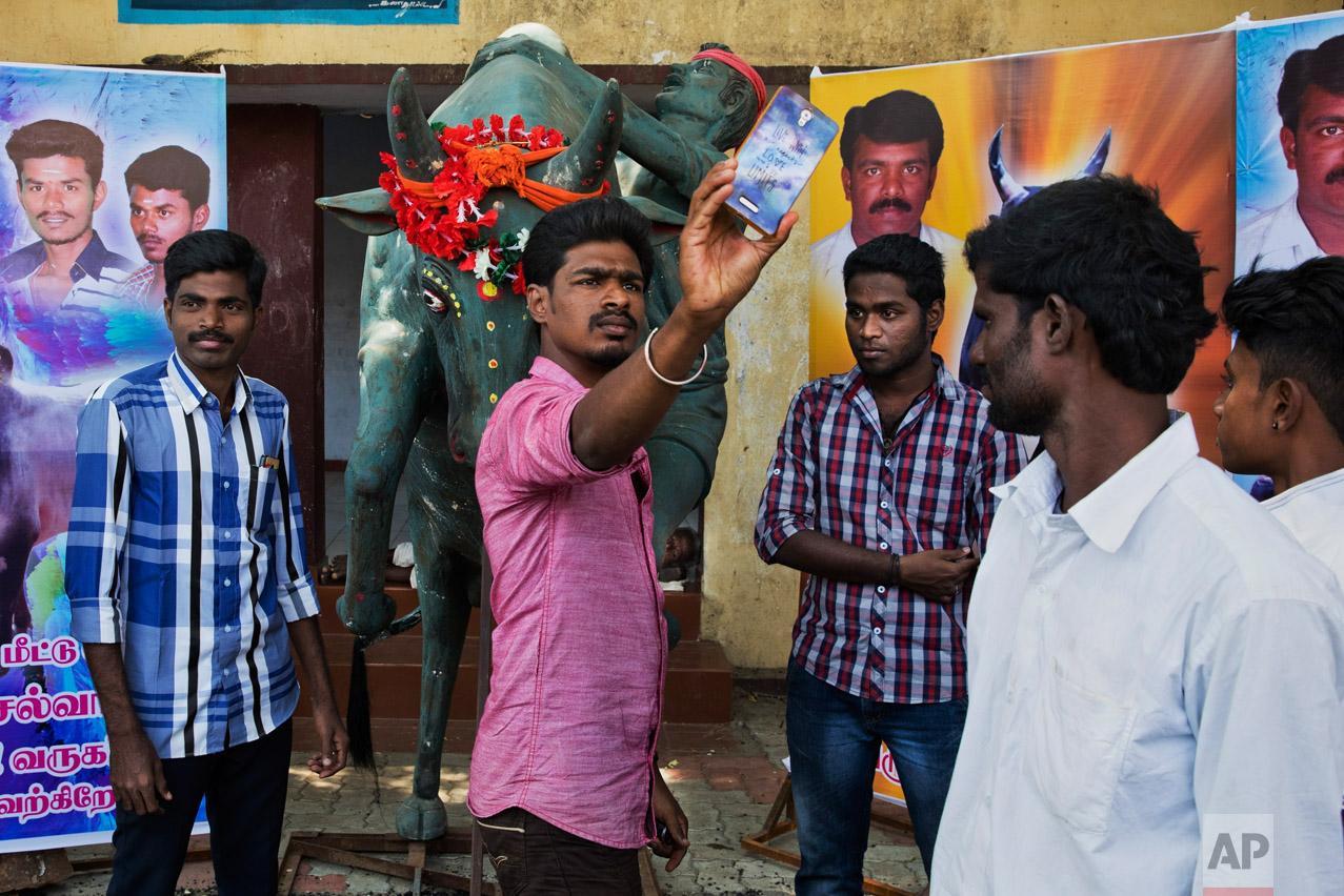 In this Feb. 10, 2017 photo, Jallikattu supporters take snapshots near a sculpture dedicated to the traditional bull-taming festival, near Madurai, Tamil Nadu state, India. (AP Photo/Bernat Armangue)