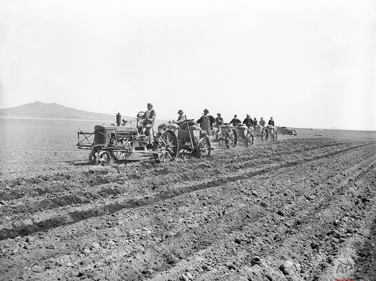 Using light tractors, Japanese residents of their Relocation Center at Tule Lake  California May 22, 1943, begin planting potatoes in the several hundred acres of fertile soil of reclaimed old Tule Lake  (stet). (AP Photo)