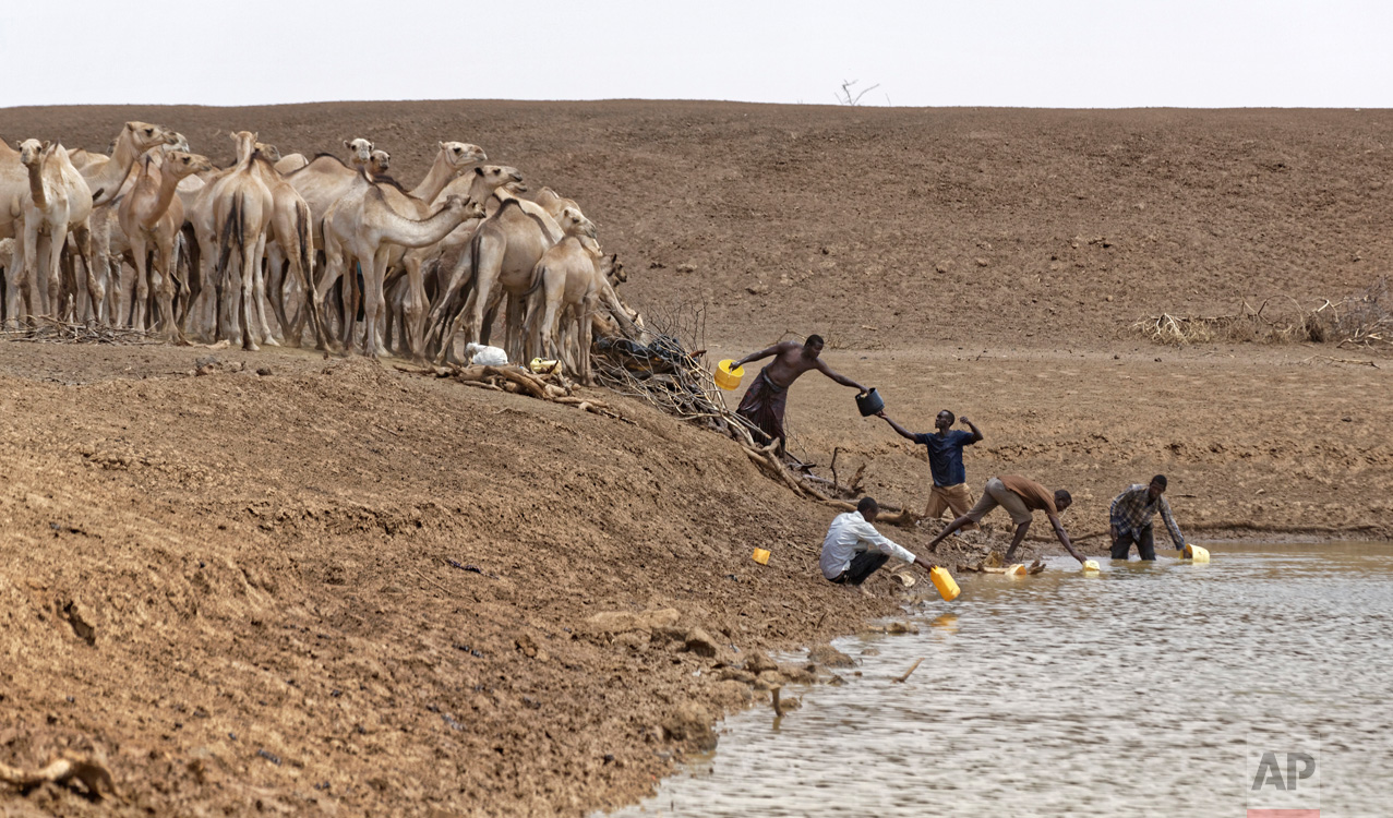 "Camel herders scoop up water in plastic buckets from one of the few watering holes in the area, to water their animals near the drought-affected village of Bandarero, northern Kenya, near Moyale town on the Ethiopian border, Friday, March 3, 2017. The U.N. humanitarian chief, Stephen O'Brien, toured Bandarero on Friday and called on the international community to act to ""avert the very worst of the effects of drought and to avert a famine to make sure we don't go from what is deep suffering to a catastrophe."" (AP Photo/Ben Curtis)"