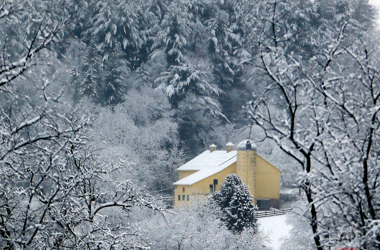 A yellow barn is surrounded by snow covered trees after an overnight snowstorm on Friday, March 10, 2017, in Zelienople, Pa. (AP Photo/Keith Srakocic)