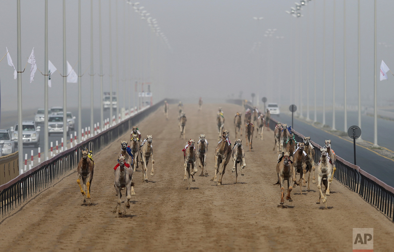 In this Friday, April 14, 2017 photo, camels run towards the finish line as their owners in SUVs control the robotic jockeys from cars, at the Al Marmoom Camel Racetrack, in al Lisaili about 40 km (25 miles) southeast of Dubai, United Arab Emirates. (AP Photo/Kamran Jebreili)