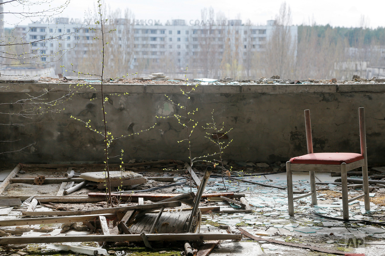 In this photo taken Wednesday, April 5, 2017, small trees grow on a balcony in the deserted town of Pripyat, some 3 kilometers (1.86 miles) from the Chernobyl nuclear power plant Ukraine. (AP Photo/Efrem Lukatsky)