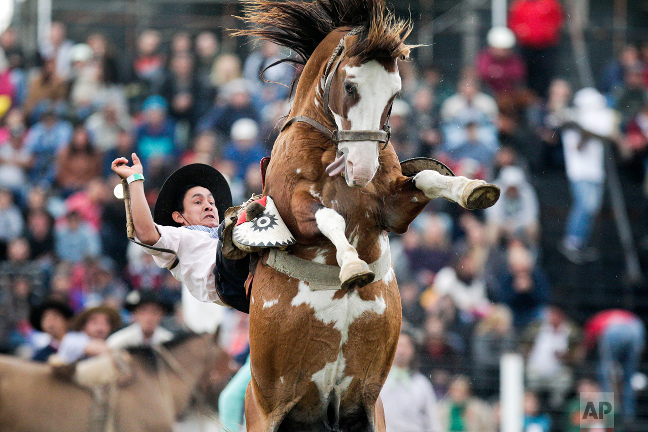 A South American cowboy known as a gaucho tries to tame a wild horse during the Criolla del Prado rodeo in Montevideo, Uruguay, Wednesday, April 12, 2017. During holy week the city of Montevideo organizes the rodeo to reward the best horse riders. (AP Photo/Matilde Campodonico)
