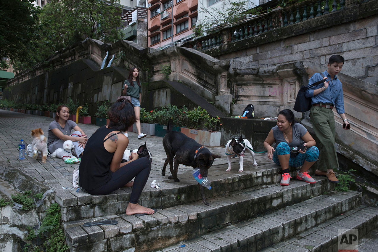 In this June 24, 2017, photo, domestic workers with dogs chat on the slope in Western district of Hong Kong. (AP Photo/Kin Cheung)