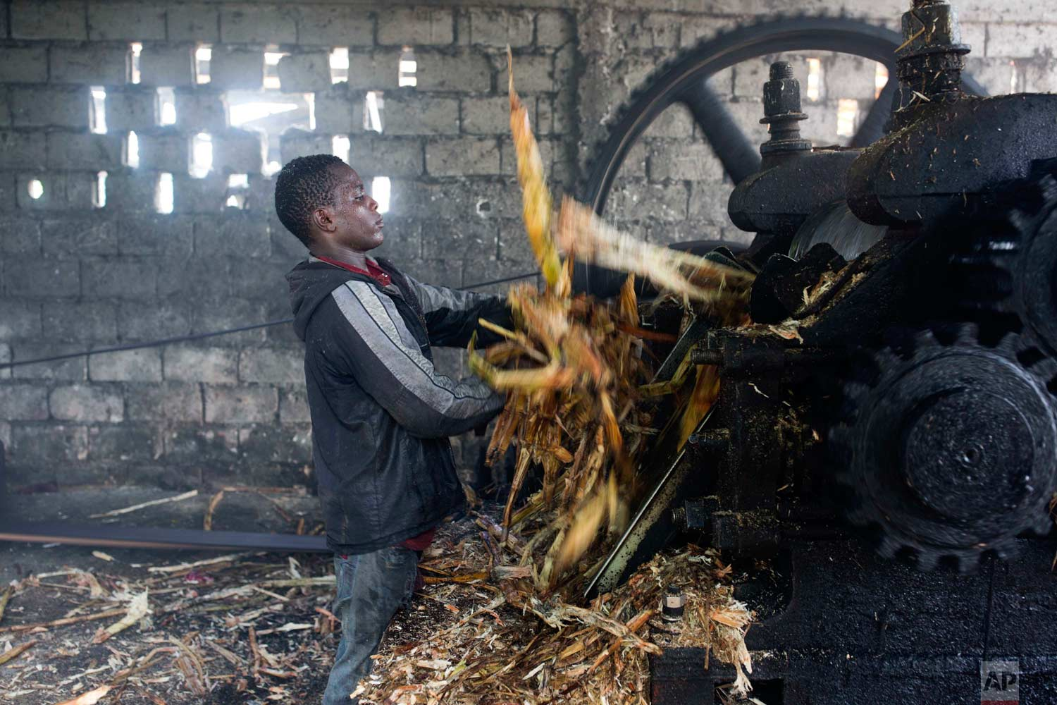 In this June 16, 2017 photo, Metson Pierre removes bagasse, fiber left over after pressing juice from sugar cane, from a grinding machine at the Ti Jean distillery where a sugar-based alcoholic drink called clairin is made in Leogane, Haiti. The 17-year-old, who was missing school, said he works to support himself after the death of his parents. (AP Photo/Dieu Nalio Chery)