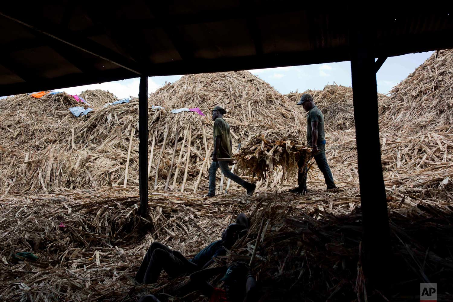 In this June 19, 2017 photo, Jean Rodelin Phillipe, 29, left, carries bagasse with Maxioner Laurent, 24, to be burned in a furnace at the Ti Jean distillery, which produces clairin, a sugar-based alcoholic drink, in Leogane, Haiti. Bagasse is the fiber left over after pressing the juice from the sugar cane, and is used to feed the fire that cooks clairin. (AP Photo/Dieu Nalio Chery)