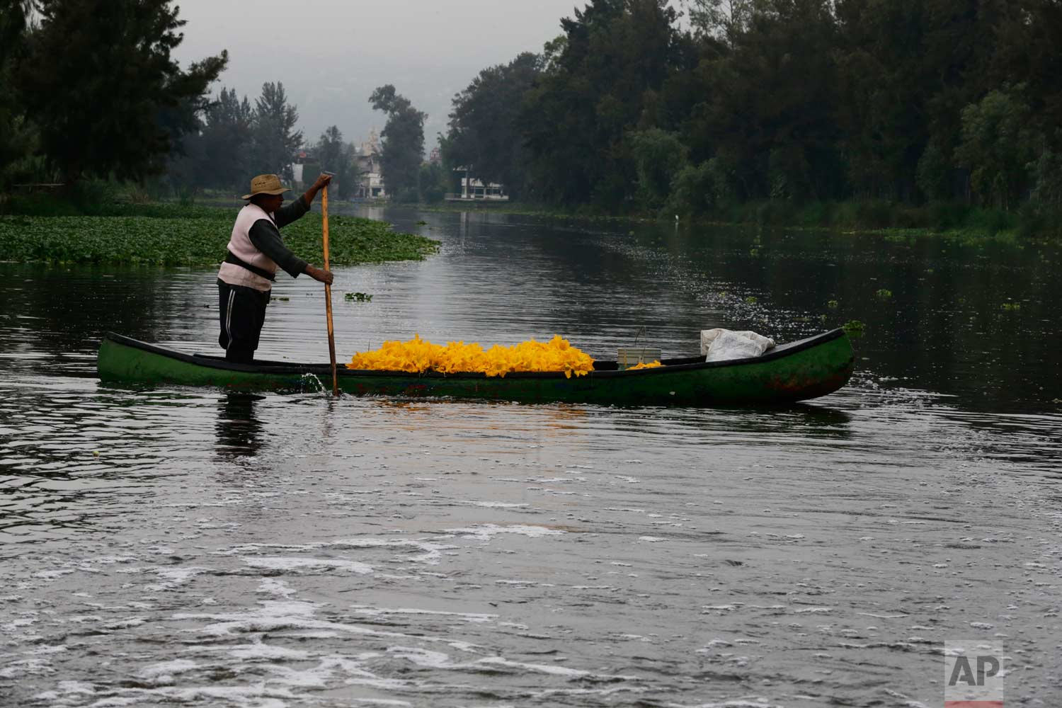 In this July 13, 2017, a farmer moves his harvest of squash flowers through the channels of Xochimilco in Mexico City. (AP Photo/Marco Ugarte)
