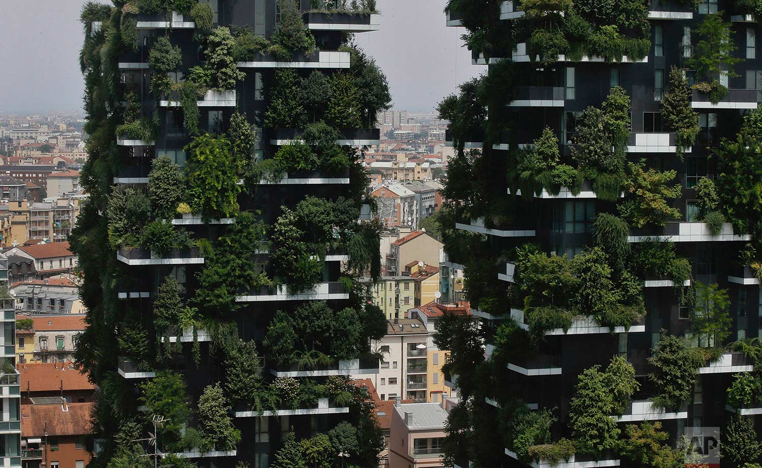 The twin towers of the Bosco Verticale (Vertical Forest) residential buildings at the Porta Nuova district, rise above Milan, Italy, on Thursday, Aug. 3, 2017. (AP Photo/Luca Bruno)