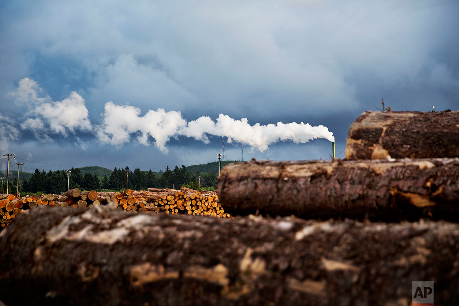 Logs are piled at a lumber yard in Aberdeen, Wash., Monday, June 12, 2017. The timber economy started to slip in the 1960s, slowly at first. Then the federal government in 1990 limited the level of logging in an attempt to save an endangered owl, the ships stopped coming and the river that used to drive the economy now sits still. (AP Photo/David Goldman)