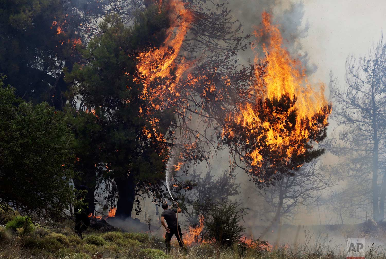 A volunteer tries to extinguish burning trees during a forest fire near Kapandriti, Greece, north of Athens, Tuesday, Aug. 15, 2017.(AP Photo/Ioanna Spanou)