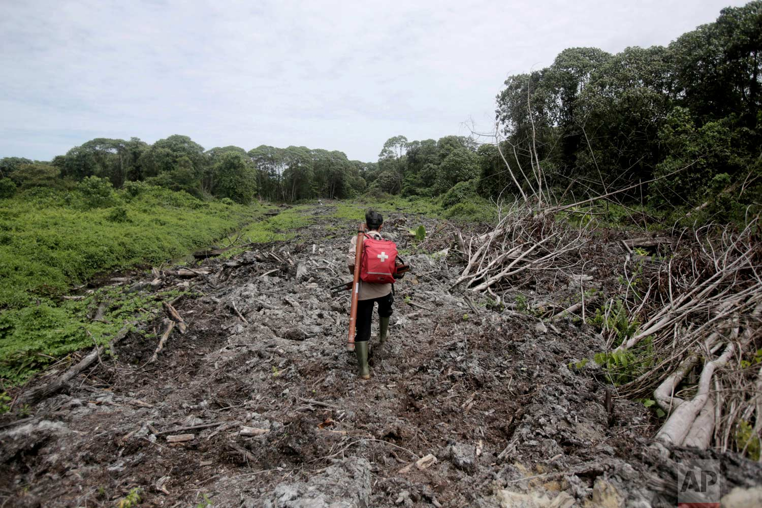 In this Thursday, Aug. 10, 2017 photo, Pandu Wibisono, a conservationist of the Sumatran Orangutan Conservation Program (SOCP), carries a medical pack and tranquilizer rifle during a rescue operation for orangutans trapped in a swath of disrupted forest near a palm oil plantation at Tripa peat swamp in Aceh province, Indonesia. (AP Photo/Binsar Bakkara)