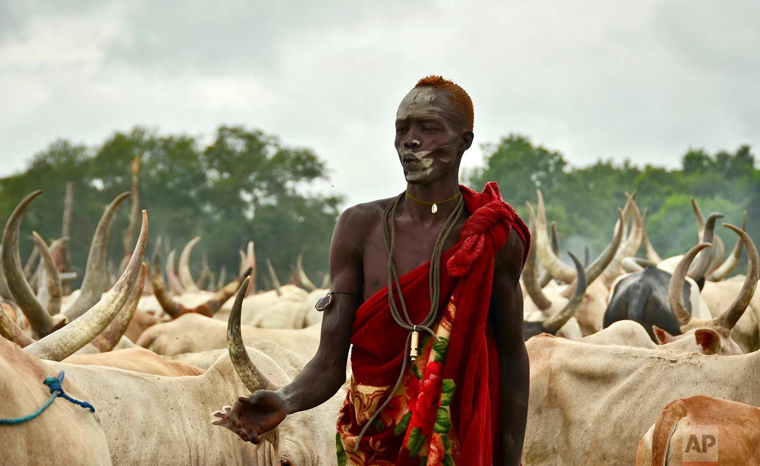 """In this photo taken Monday, July 31, 2017, a young South Sudanese man tends to his herd of cattle at a camp outside the town of Rumbek, South Sudan. Cows are used for payments and dowries, which Human Rights Watch calls a """"key driver of child marriage"""" as families see daughters as a source of wealth. (AP Photo/Mariah Quesada)"""