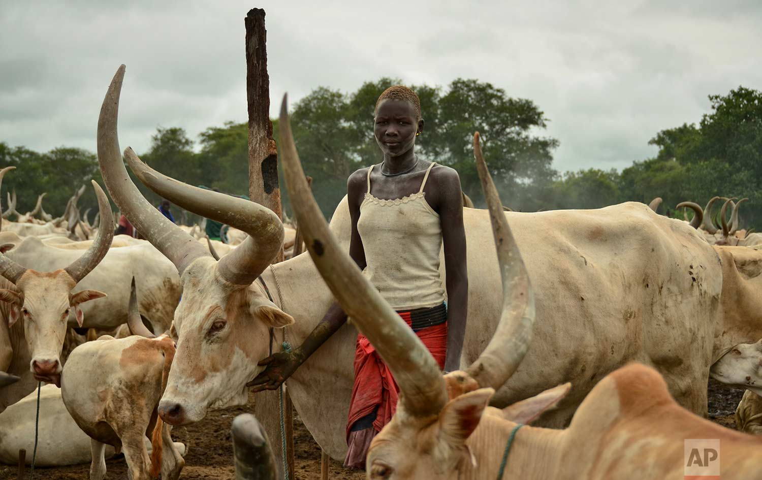 In this photo taken Monday, July 31, 2017, Amat, 17, who is not married but expects to be soon, tends to cattle at the camp where she grew up outside the town of Rumbek, South Sudan. (AP Photo/Mariah Quesada)