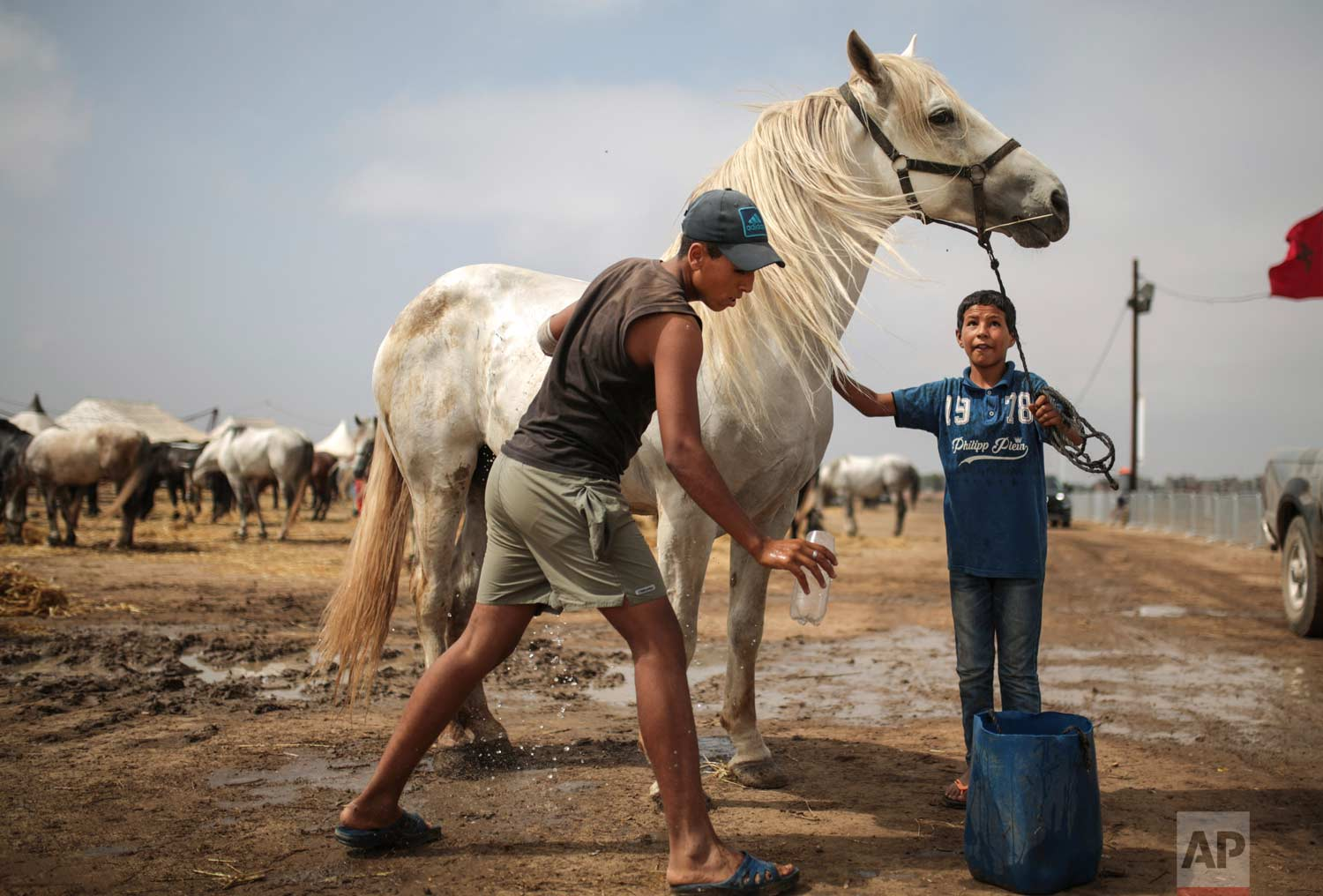 In this Thursday, Aug. 17, 2017 photo, kids wash their horses as they are prepared for Tabourida, a traditional horse riding show also known as Fantasia, in Mansouria, near Casablanca, Morocco. (AP Photo/Mosa'ab Elshamy)