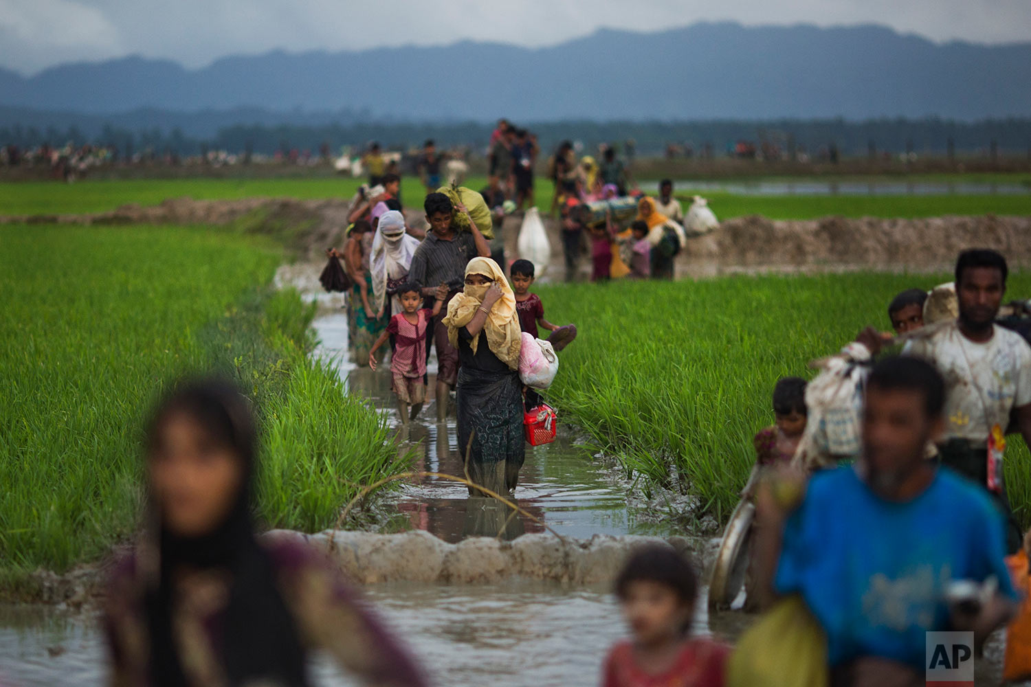Myanmar's Rohingya ethnic minority members walk through rice fields after crossing over to the Bangladesh side of the border near Cox's Bazar's Teknaf area, Friday, Sept. 1, 2017. Thousands of Rohingya Muslims are pouring into Bangladesh, part of an exodus of the beleaguered ethnic group from neighbouring Myanmar that began when violence erupted there on August 25. Most of Myanmar's estimated 1 million Rohingya live in northern Rakhine state. They face severe persecution, with the government refusing to recognize them as a legitimate native ethnic minority, leaving them without citizenship and basic rights. (AP Photo/Bernat Armangue)