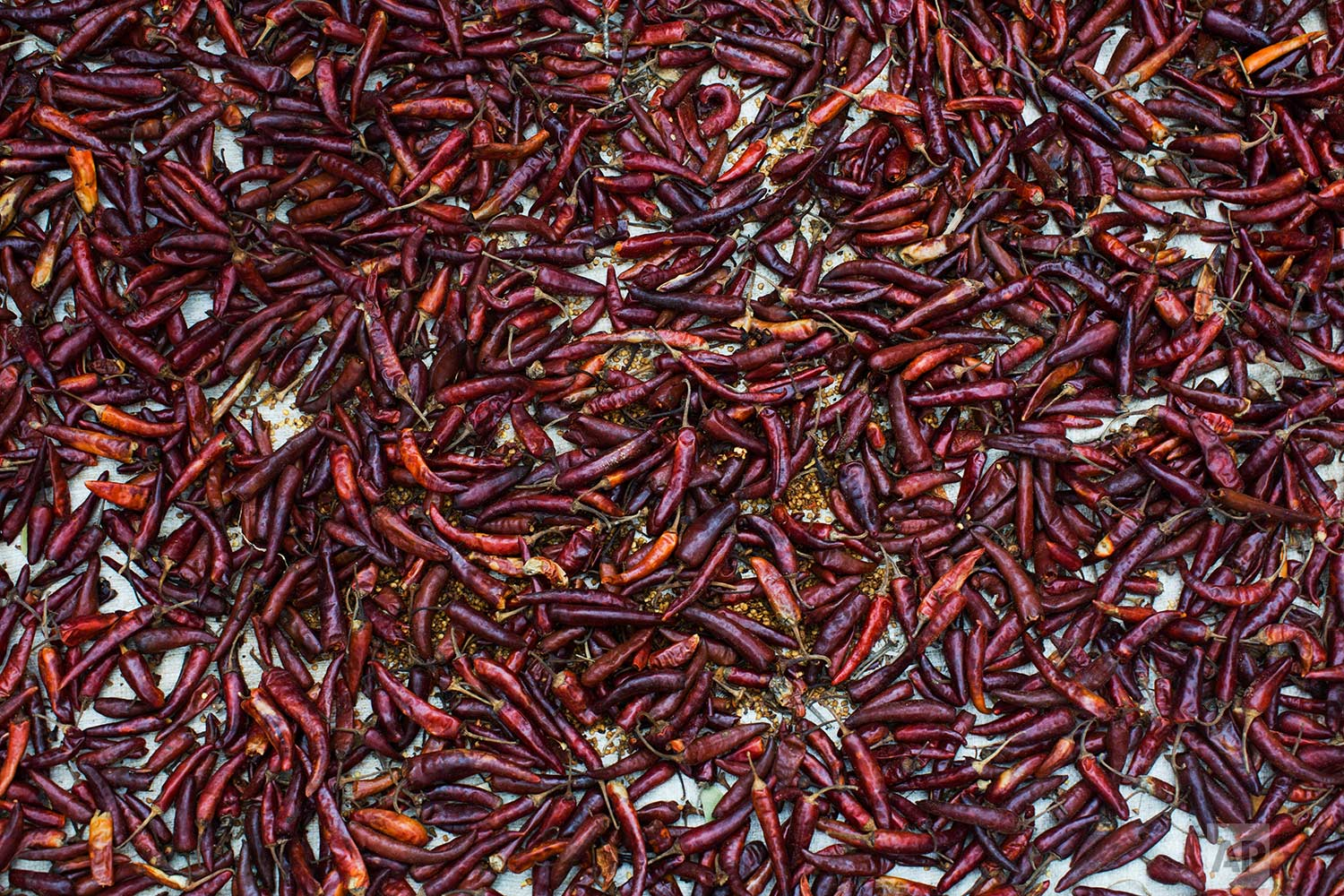 In this Thursday, Sept. 7, 2017 photo, red chilis are spread on a plastic sheet carried across the border from Myanmar into Bangladesh by fleeing Rohingya Muslim in Teknaf area. (AP Photo/Bernat Armangue)