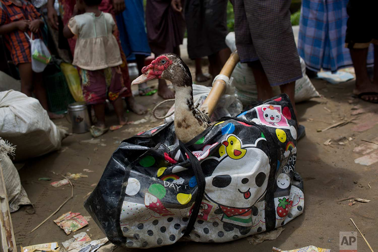 In this Thursday, Sept. 7, 2017 photo, a duck pops its neck out of a bag, carried across the border from Myanmar into Bangladesh by fleeing Rohingya Muslim in Teknaf area. (AP Photo/Bernat Armangue)