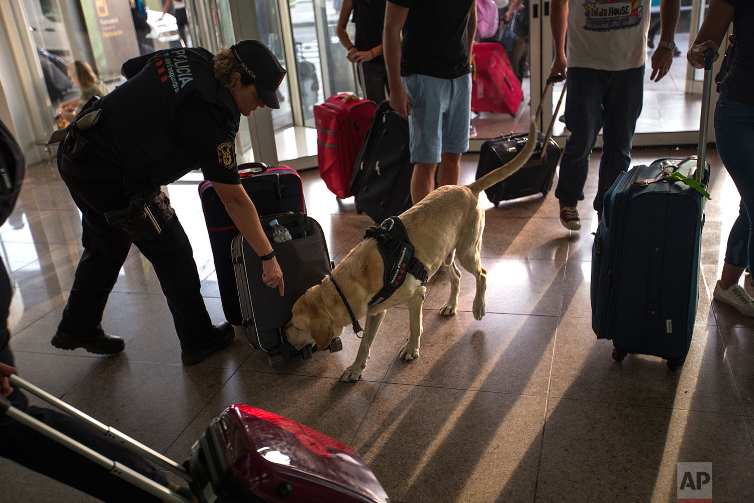 In this Thursday, Sept. 21, 2017 photo, a Catalan Mossos d'Esquadra officer works with her sniffer dog inspecting suitcases, at one of the entrances of the Barcelona airport, Spain. The Mossos, in their dark blue uniforms, patrol the streets of Catalonia, one of Spain's 17 autonomous regions with broad rights of self-government, and also operate special forces units. (AP Photo/Emilio Morenatti)