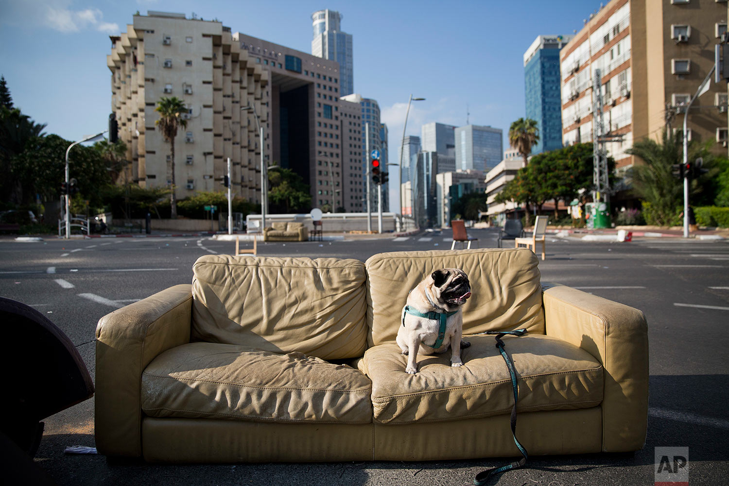 A dog sits on a sofa that has been placed on a car-free street during the Jewish holiday of Yom Kippur in Ramat Gan, Israel, Saturday, Sept. 30, 2017.(AP Photo/Oded Balilty)
