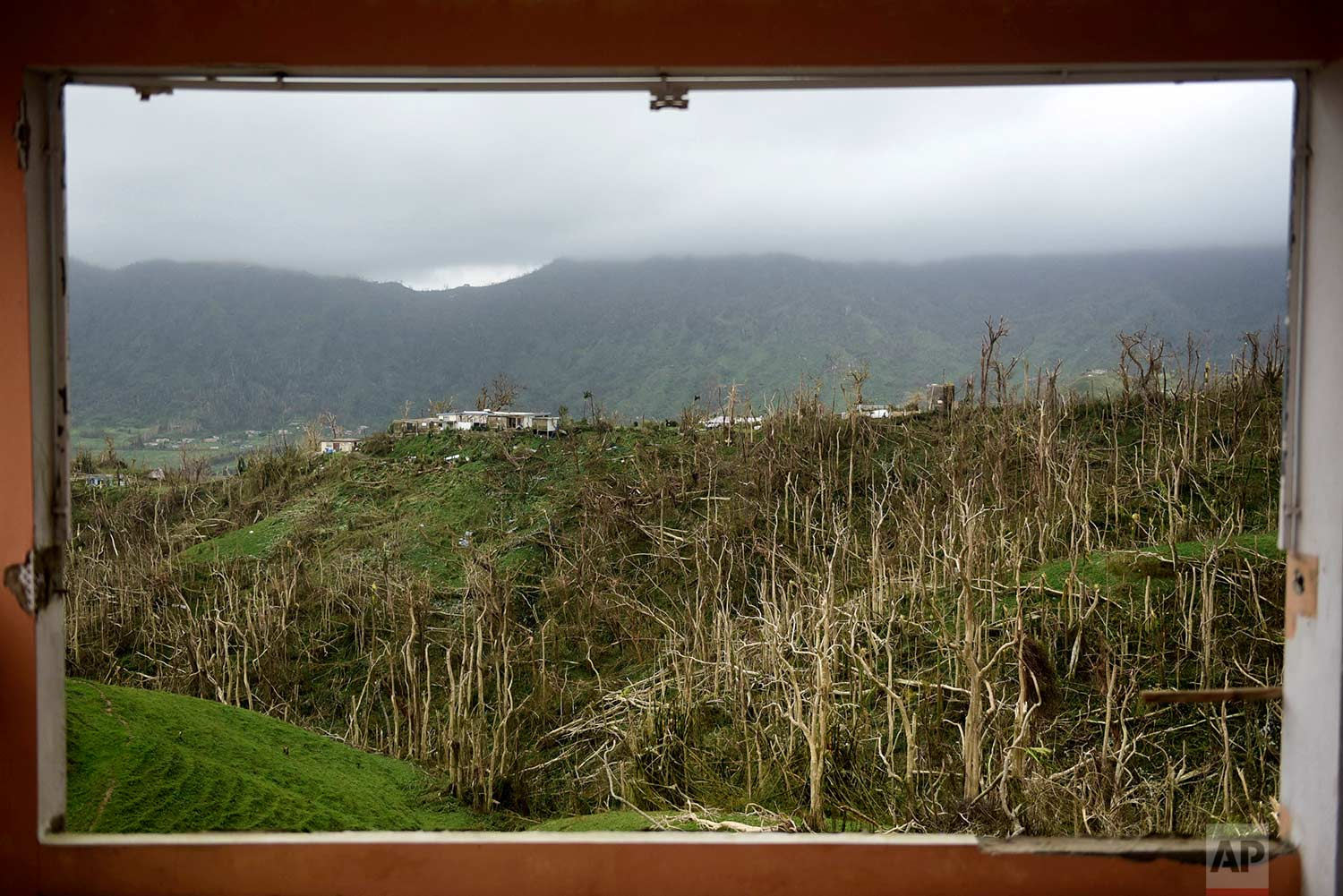 In this Sept. 21, 2017, trees stand stripped of their foliage by the winds of Hurricane Maria, in Yabucoa, Puerto Rico. (AP Photo/Carlos Giusti)