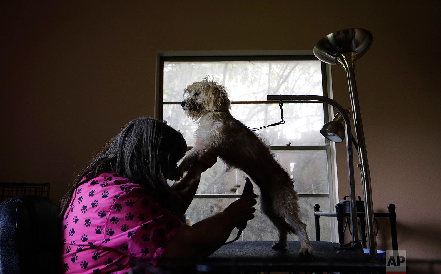 """Lori Cox grooms a dog, rescued during the previous month's Hurricane Harvey, at her home in Beaumont, Texas, Wednesday, Sept. 27, 2017. The region's economy is tied to the petroleum industry more than in any other place in America: the concentration of people here employed by refineries is 81 times higher than the rest of the country. """"For all these good jobs, we have to pay an environmental price. It's the trade-off. It's almost like we made this deal with the devil,"""" said Cox. (AP Photo/David Goldman)"""