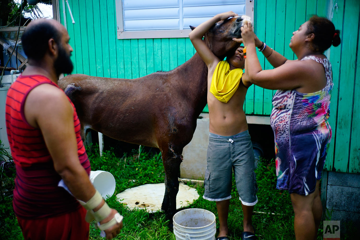 In this Friday, Oct. 13, 2017 photo, Arturo de Jesus Melendez watches his wife and son give medicine to a horse that was abandoned by its owner in the wake of Hurricane Maria in Toa Baja, Puerto Rico.  (AP Photo/Ramon Espinosa)