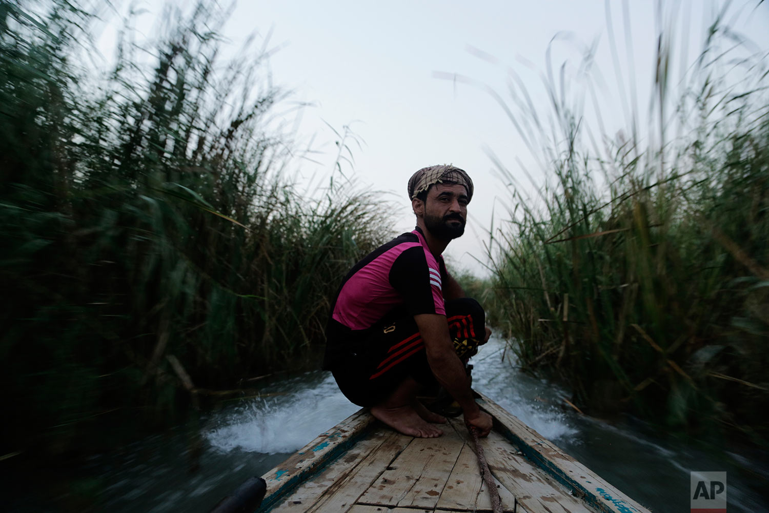 In this Sept. 11, 2017 photo, a young man drives a boat through a tunnel of towering reeds, in the marsh of Chabaish, Iraq, Sept. 11, 2017. Increasingly unable to support their families with fishing and farming, hundreds of young men from the area took up arms in the fight against the Islamic State group, joining state-sanctioned Shiite militias. (AP Photo/Susannah George)