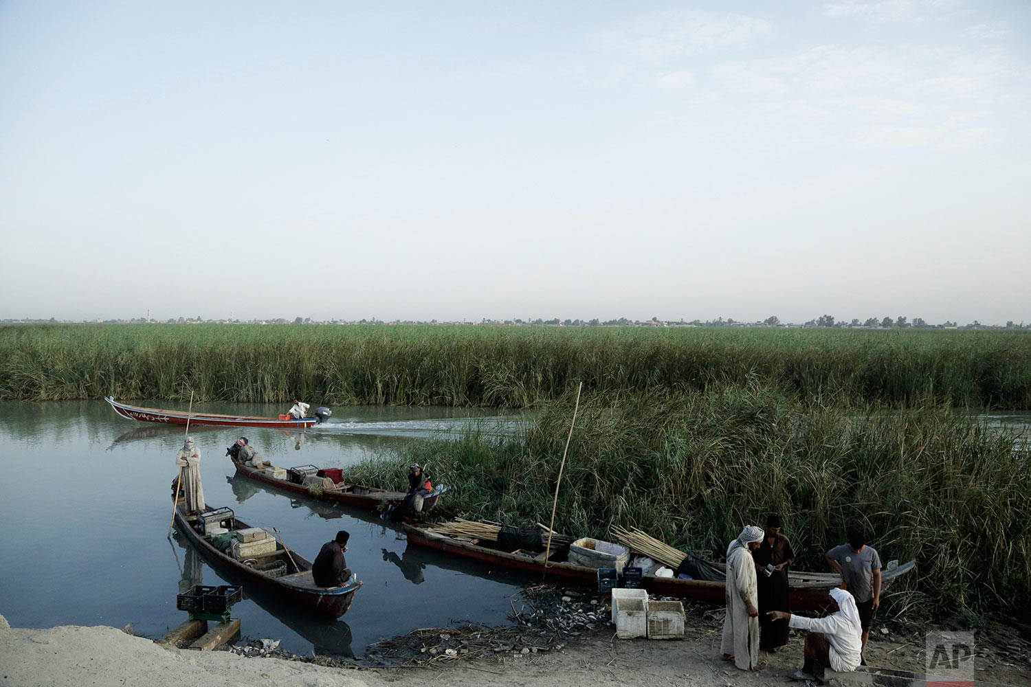 In this Sept. 10, 2017 photo, fishermen gather in the morning at an ad hoc market along a main canal in the marsh of Chabaish, Iraq. From here merchants buy fish to transport and sell to markets in the nearby cities of Nassariyah and Najaf in Iraq's south. (AP Photo/Susannah George)