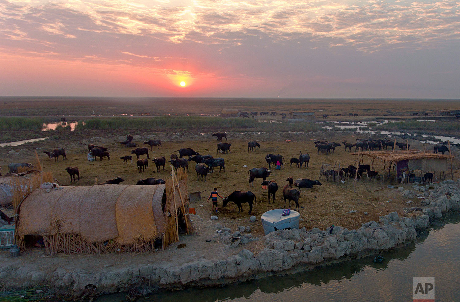 In this Monday, Sept. 11, 2017 photo, the sun sets over an island paddock for water buffalo in the Chabaish marsh in Nasiriyah, about 200 miles (320 kilometers) southeast of Baghdad, Iraq. Iraq's southern marshes, a lush remnant of the cradle of civilization, were reborn after the 2003 fall of Saddam Hussein when residents dismantled dams he had built a decade earlier to drain the area in order to root out Shiite rebels. But now the largest wetlands in the Middle East are imperiled again, by government mismanagement and new upstream projects.(AP Photo/Nabil al-Jurani)