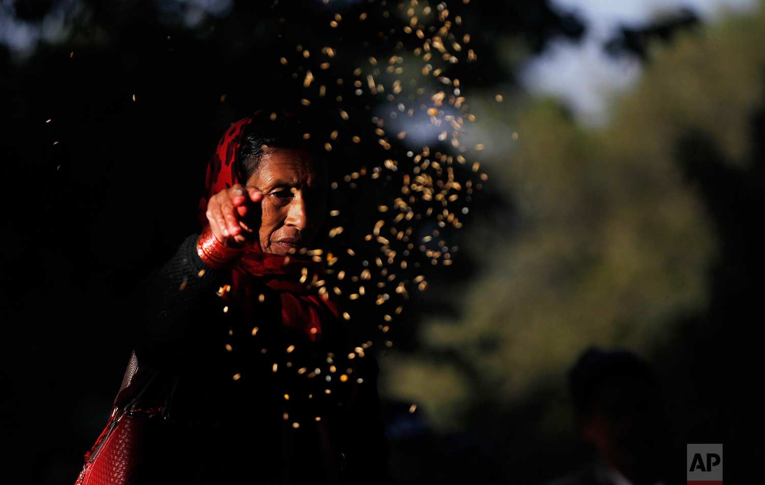 A woman scatters grains during Bala Chaturdashi festival in the courtyard of Pashupatinath temple in Kathmandu, Nepal, Friday, Nov. 17, 2017. (AP Photo/Niranjan Shrestha)