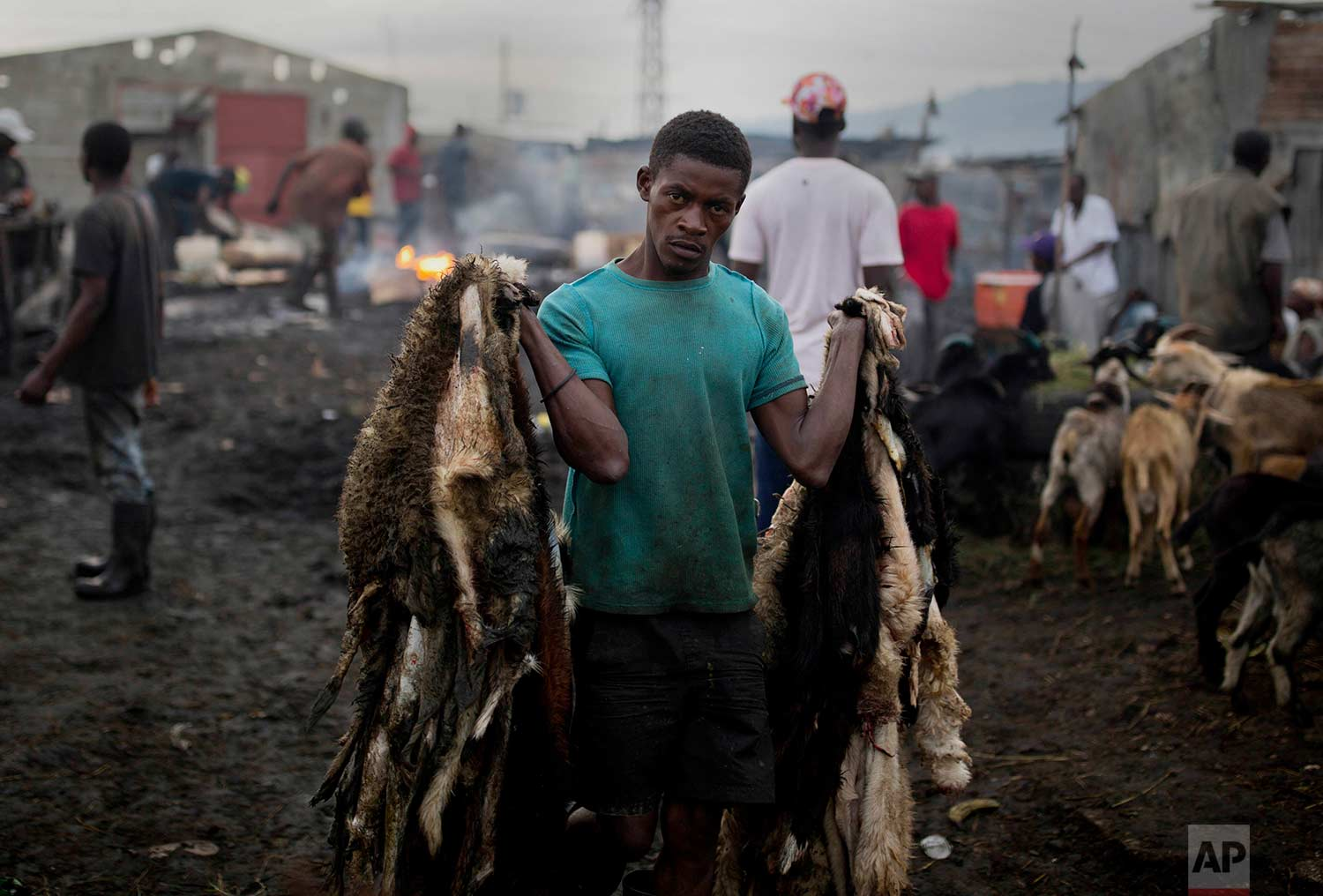 In this Nov. 9, 2017 photo, goat skinner Sonson Pierre hauls goat pelts at the La Saline slaughterhouse, in Port-au-Prince, Haiti. The 28-year-old, who has worked at the open-air market for 12 years, is dismayed that a market which provides meat to most of the capital's supermarkets and restaurant, is so unregulated. (AP Photo/Dieu Nalio Chery)