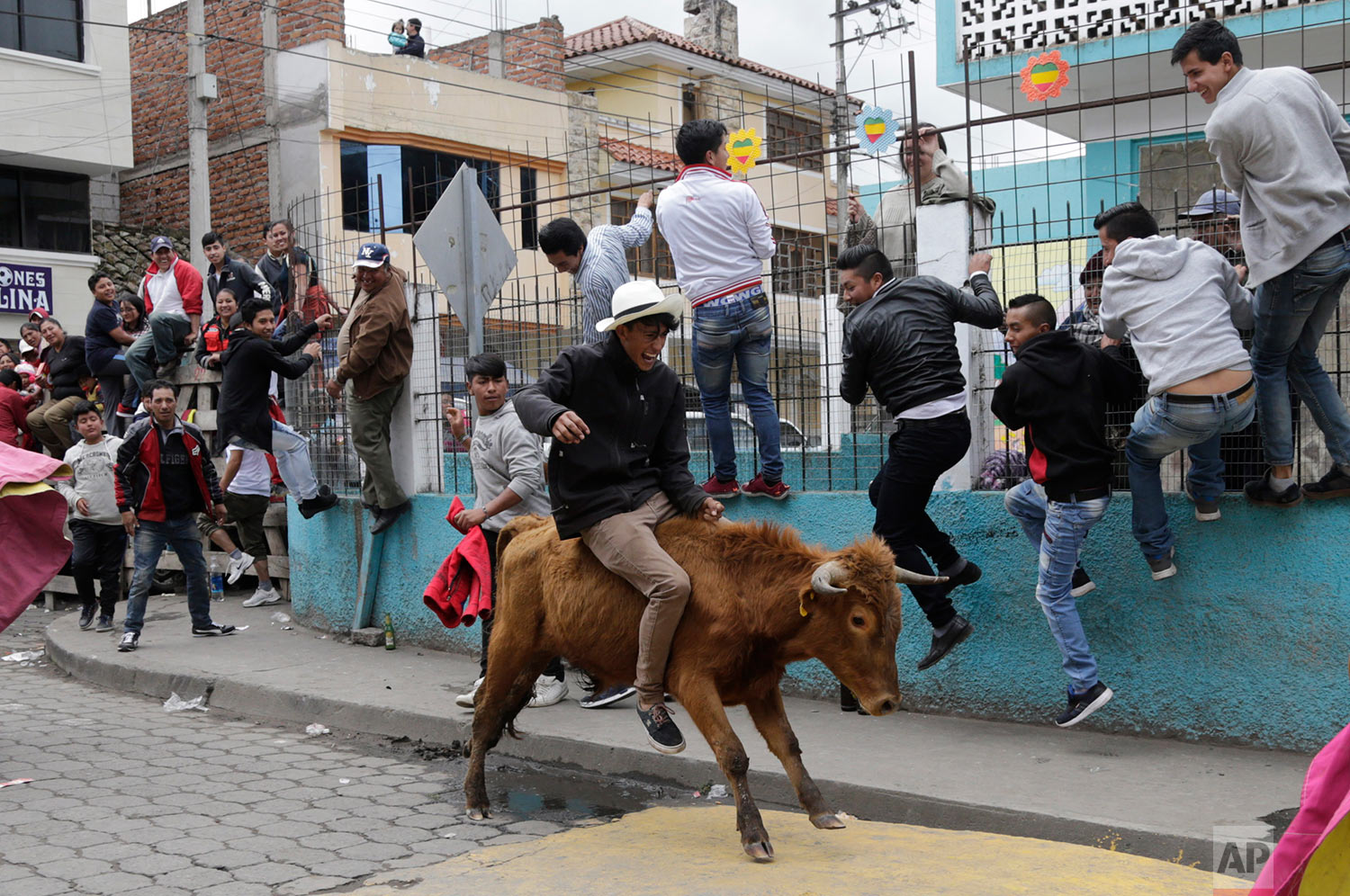 """A man rides a bull during a running of the bulls event coined """"Pamplonada Pillarense"""" in Pillaro, Ecuador, Saturday, Aug. 5, 2017. The small Andean city sets loose about 40 bulls during the town's annual fair. (AP Photo/Dolores Ochoa)"""