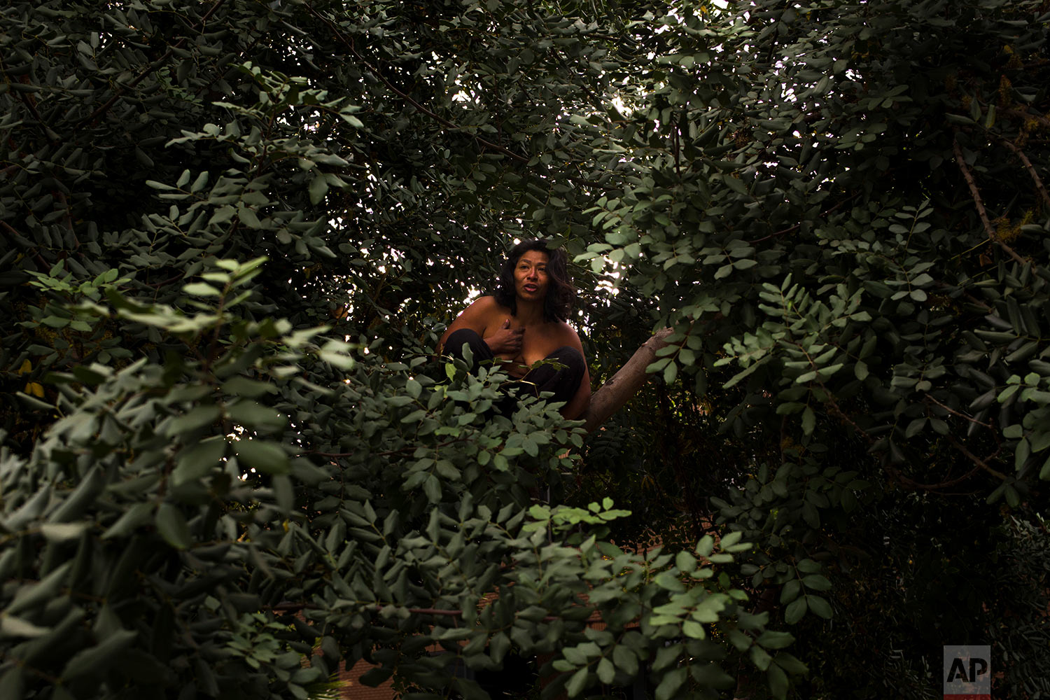 A mentally-ill homeless woman talks into the air in Spanish while sitting in a tree naked Friday, Nov. 3, 2017, in Santa Ana, Calif. A passing homeless man, who said he had seen her in a tree a few times before, tossed some clothes to help her cover herself, but she declined his offer. (AP Photo/Jae C. Hong)