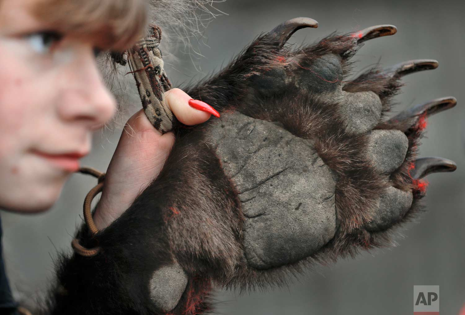 In this Saturday, Dec. 30, 2017, picture a girl wearing a bear fur costume gets ready for the start of the annual bear parade in Comanesti, Romania. (AP Photo/Vadim Ghirda)