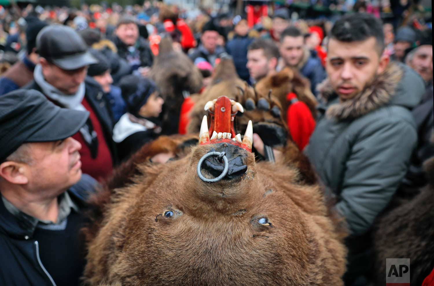 In this Saturday, Dec. 30, 2017, picture people wearing a bear fur costumes make their way through the crowds during an annual bear parade in Comanesti, Romania. (AP Photo/Vadim Ghirda)