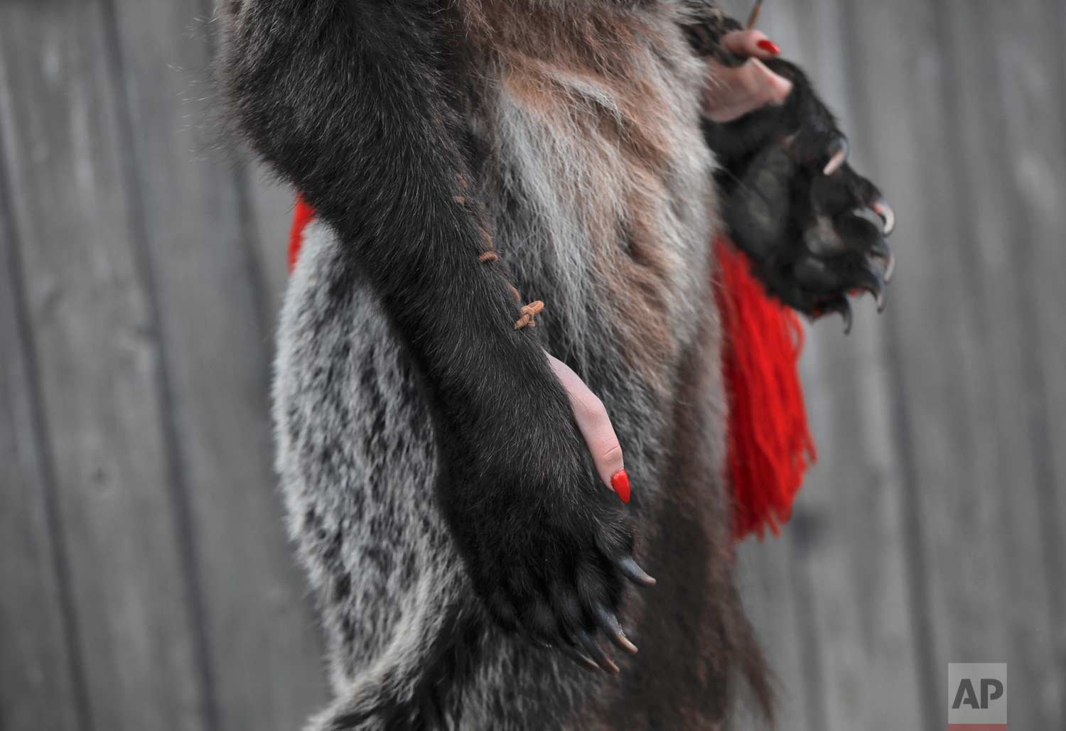 In this Saturday, Dec. 30, 2017, picture a girl wearing a bear fur costume takes part in an annual bear parade in Comanesti, Romania. (AP Photo/Vadim Ghirda)