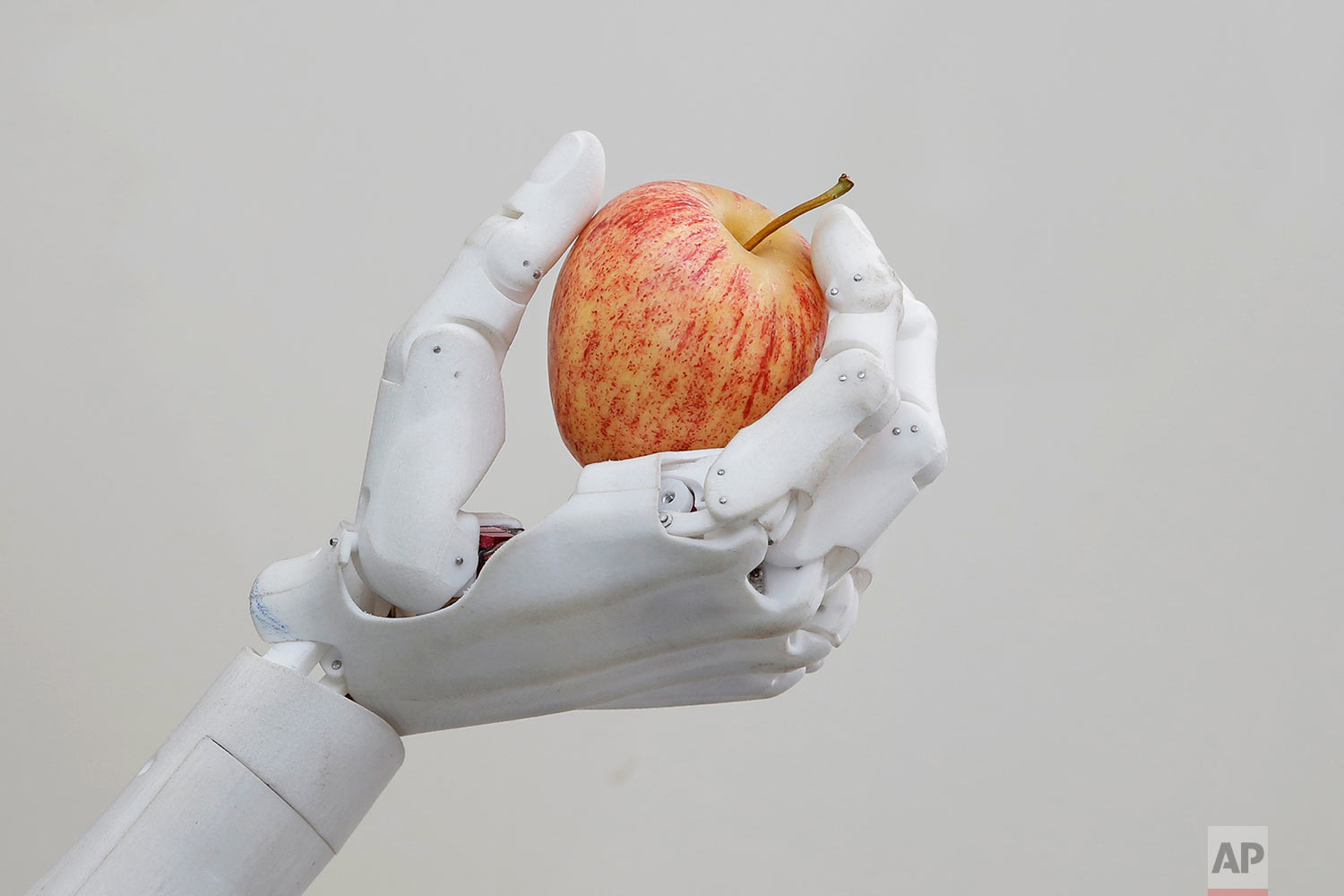 In this Sept. 28, 2017, photo, Hanson Robotics' flagship robot Sophia, a lifelike robot powered by artificial intelligence, holds an apple in Hong Kong. (AP Photo/Kin Cheung) |  See these photos on AP Images