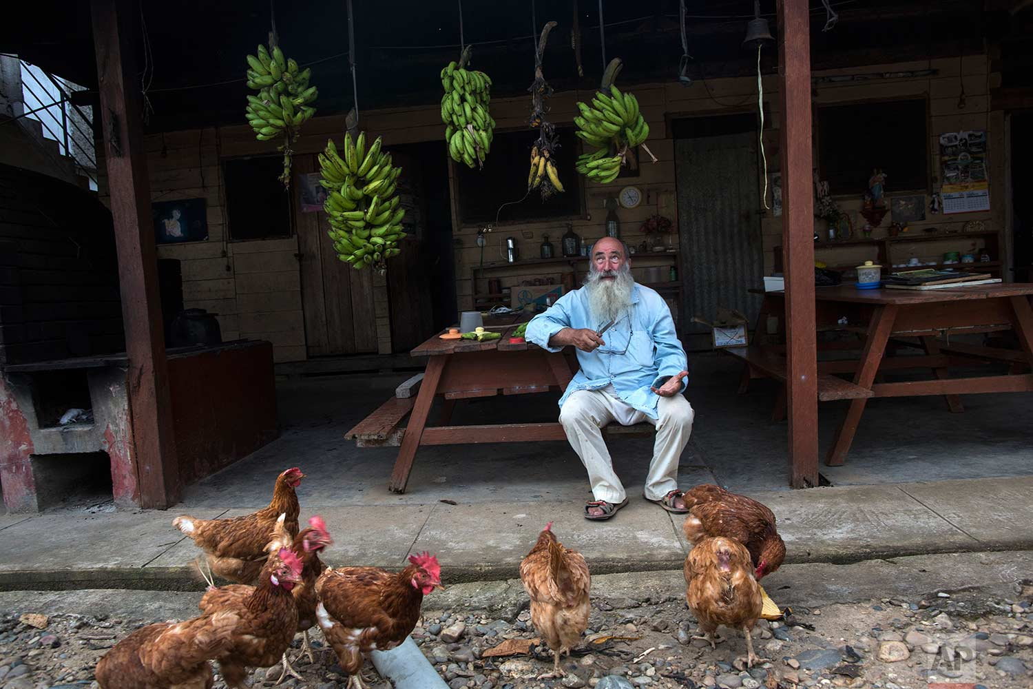In this Jan. 10, 2018 photo, Father Pablo Zabala, better known as Padre Pablo, sits underneath bunches of bananas he has harvested while feeding a flock of chickens at the parish in Boca Colorado, part of Peru's Madre de Dios region. Zabala has lived in the Amazon for 24 years and spent the last 10 running a Catholic parish that works with about two dozen mining camps. He first traveled to the Amazon in 1978 when, as a young biologist, he collected butterflies and condors for his university's museum in Spain. (AP Photo/Rodrigo Abd) |  See these photos on AP Images