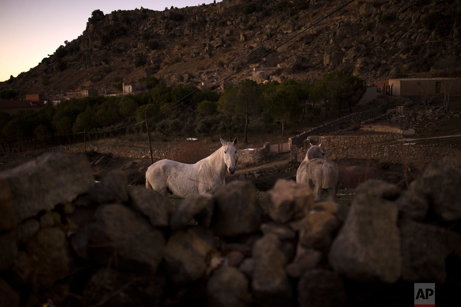 A horse stands inside a countryside enclosure before the ritual in honor of Saint Anthony the Abbot, the patron saint of animals, in San Bartolome de Pinares, Spain, Tuesday, Jan. 16, 2018. (AP Photo/Francisco Seco) |  See these photos on AP Images