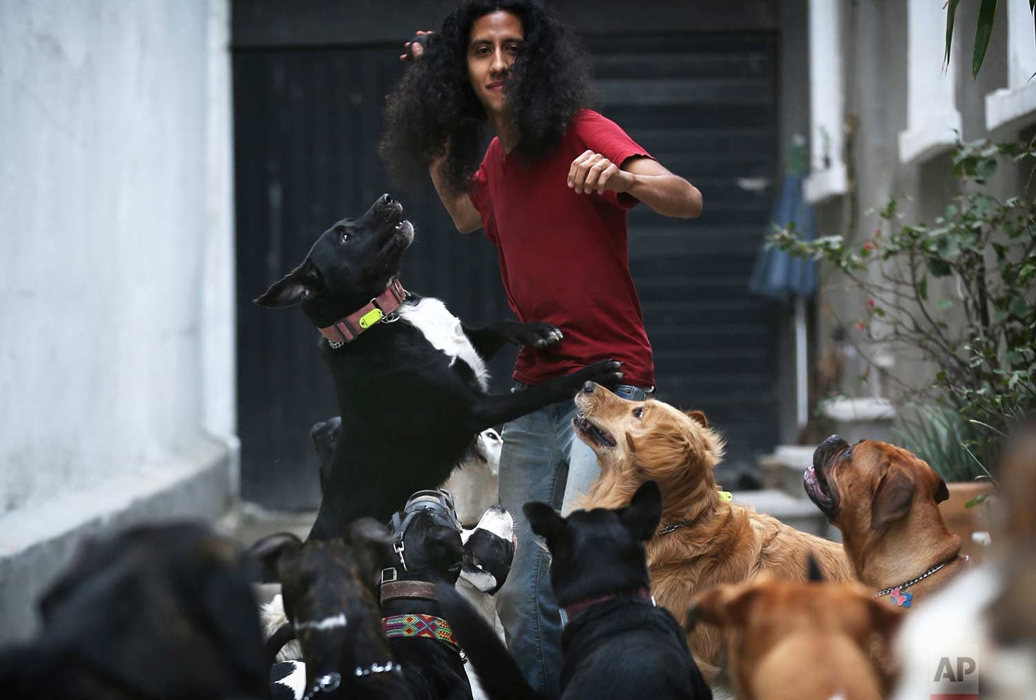 "In this Saturday, Dec. 23, 2017 photo, Jair plays with his dogs at their home and dog shelter in Mexico City. The shelter is run by Jair Benavides and his wife Miriam Gutierrez de Velasco, who go by their ""dog family"" nicknames of Jair Solcan and Miriam Luzcan, which respectively translates to ""Sundog"" and ""Lightdog"" in English. (AP Photo/Marco Ugarte)"