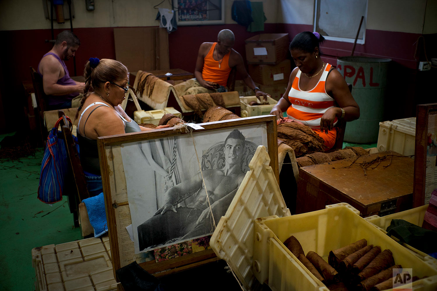 In this March 1, 2018 photo, workers select the best tobacco leaves as they sit next to a portrait of Portuguese soccer star Cristiano Ronaldo, at La Corona cigar factory in Havana, Cuba. (AP Photo/Ramon Espinosa)