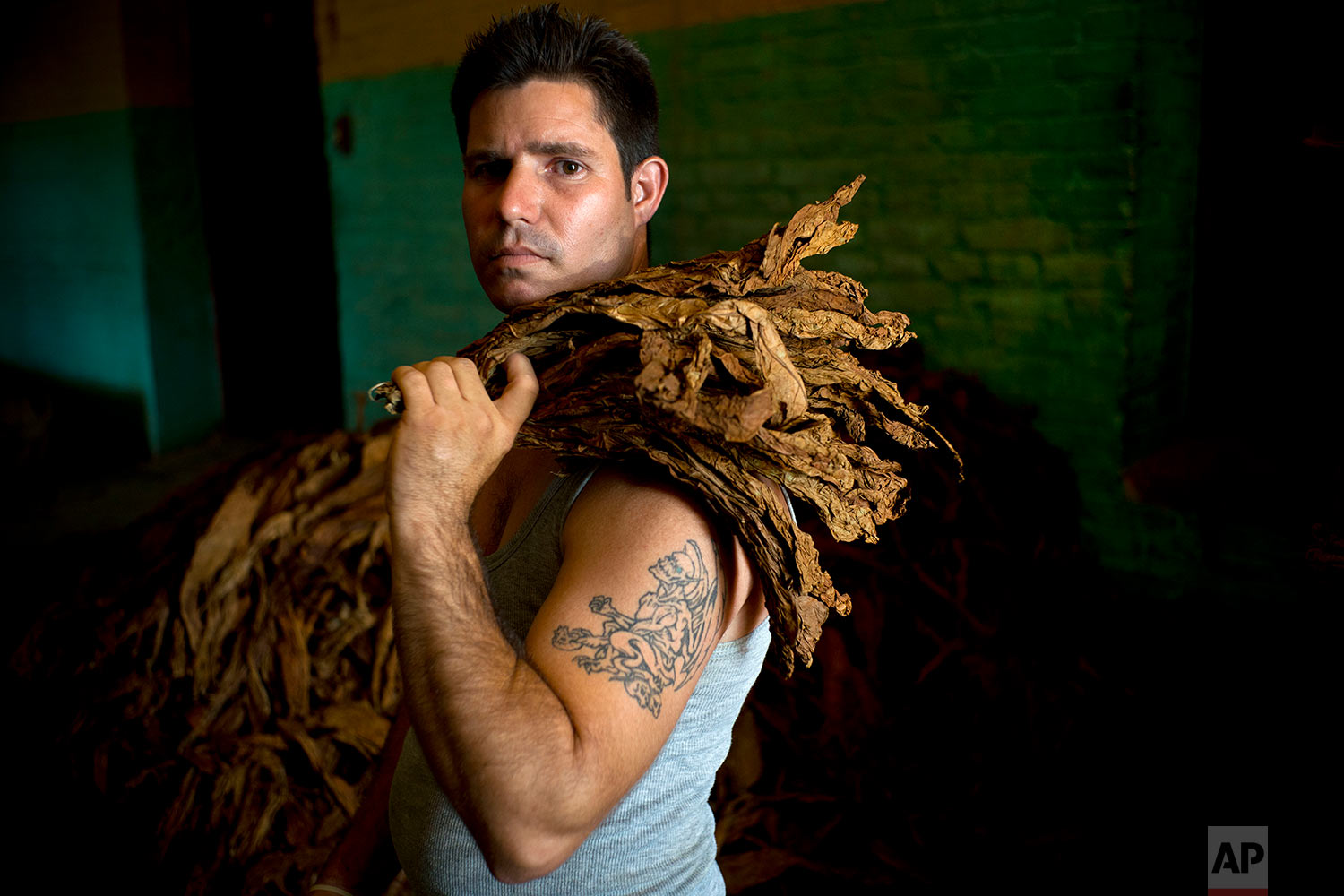 In this Feb. 27, 2018 photo, Juan Hernando Regalado Rosales, a worker specialized in the shaking process, poses with dry harvested tobacco leaves at a state-run warehouse in San Luis, in Cuba's Western province of Pinar del Rio. (AP Photo/ Ramon Espinosa)