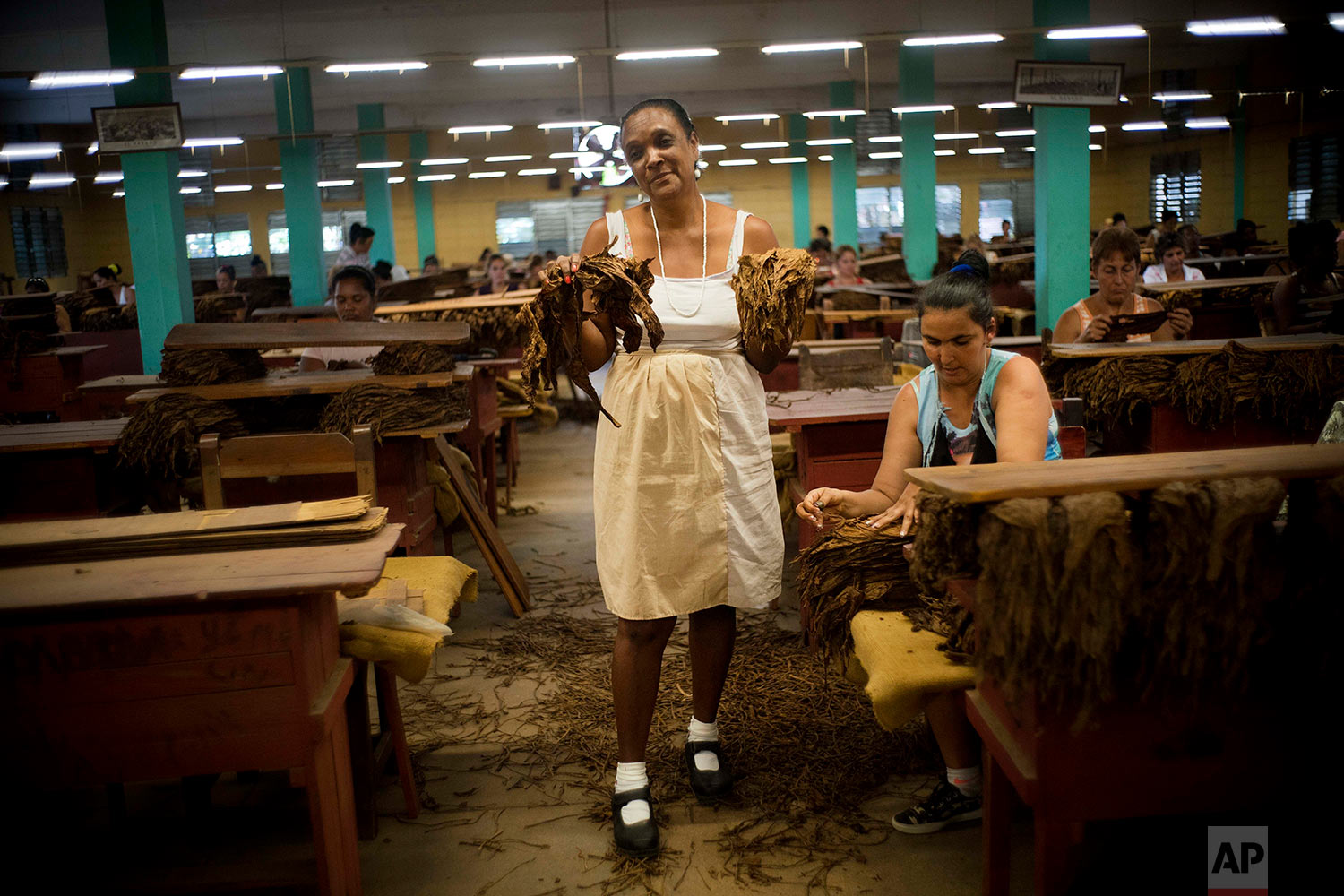 """In this Feb. 27, 2018 photo, Farra Marquez Rubiera, a worker specialized in the """"despalillo"""" poses with dry harvested tobacco leaves at a state-run warehouse in San Luis, in Cuba's Western province of Pinar del Rio. (AP Photo/Ramon Espinosa)"""