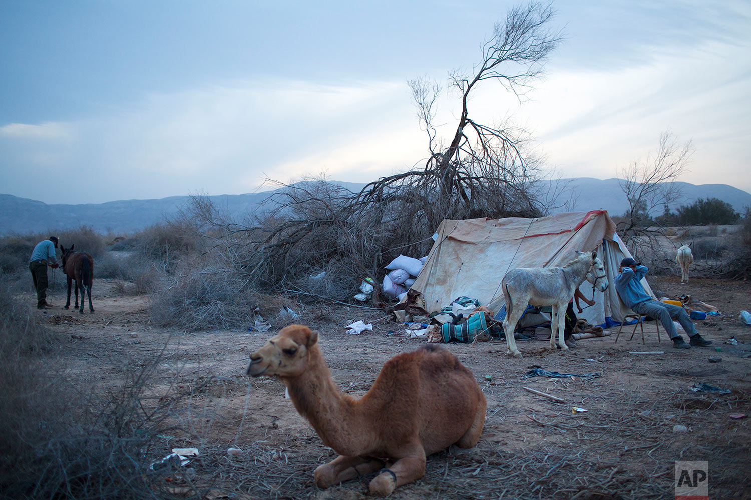 In this Friday, Feb. 9, 2018 photo, Beduin camels herders rest at the night camp after herd all day in the open field at the territory of Israeli Kibbutz Kalya, near the Dead Sea in the West Bank. (AP Photo/Oded Balilty)