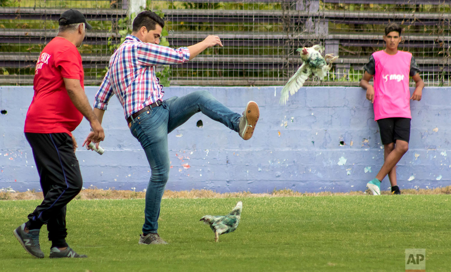 Fenix first-division club director Gaston Alegari kicks a hen after supporters from his club threw two chickens painted in white and green, the colors of the opponents Racing, on to the field during their league soccer match, in Montevideo, Uruguay, Sunday, March 11, 2018. Uruguay's soccer association decided that Fenix will have to play one match away from their home stadium because of the incident. (AP Photo/Mauricio Castillo)