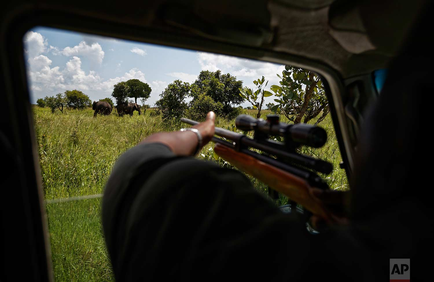 In this photo taken Friday, March 23, 2018, wildlife veterinarian Justin Shamancha prepares to shoot a tranquilizer dart at an elephant during an operation to attach GPS tracking collars to them, in Mikumi National Park, Tanzania. (AP Photo/Ben Curtis)